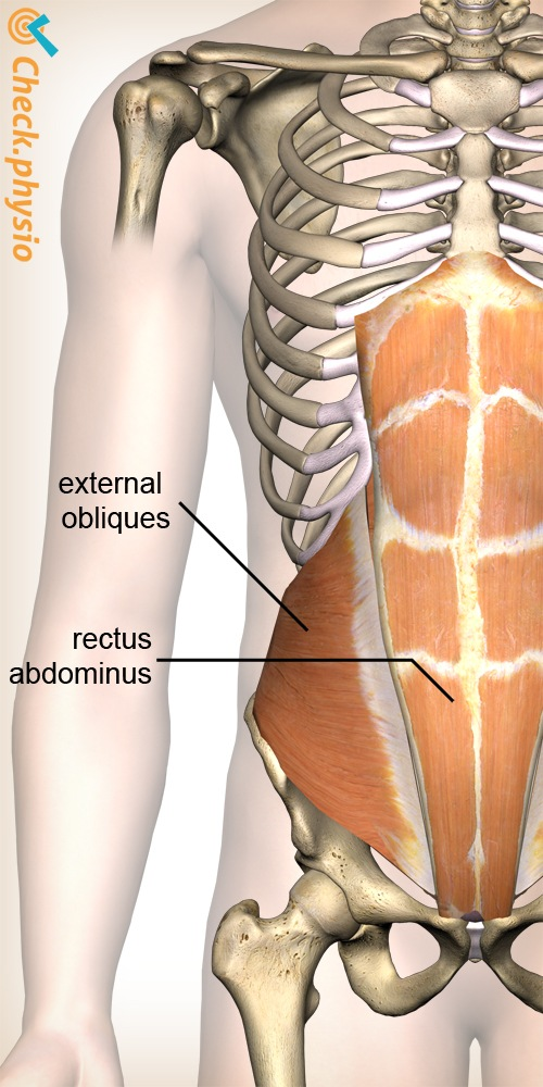 Pain in the abdominal muscles | Physio Check