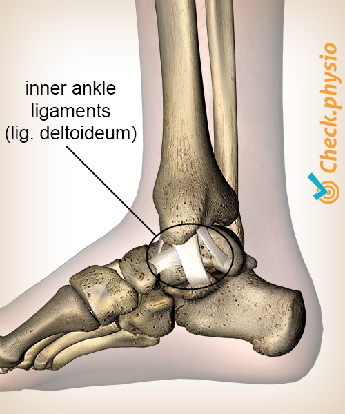 Medial Ankle Ligament Injury Physio Check
