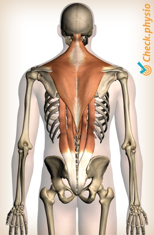 Muscle injury of the upper back | Physio Check