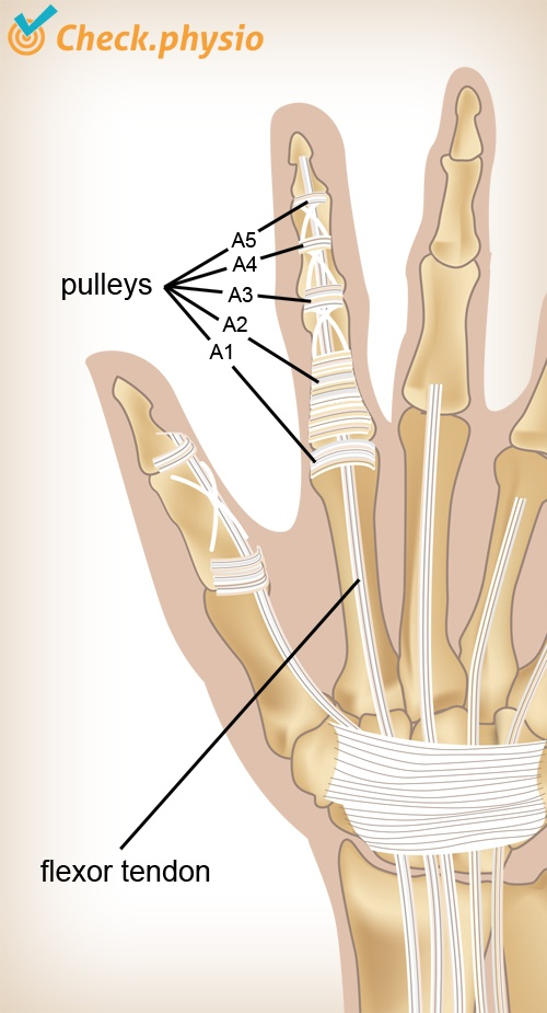 Climber\'s finger | Physio Check
