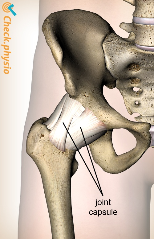 hip jointcapsule capsule joint