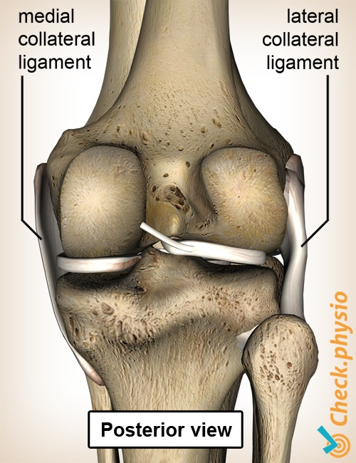 knee ligaments medial lateral collateral ligament posterior