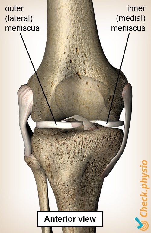 Acute Meniscus Injury Physio Check