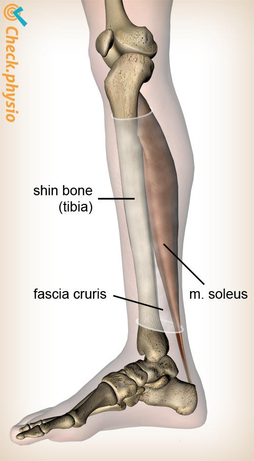 lower leg mtss fasci anatomy