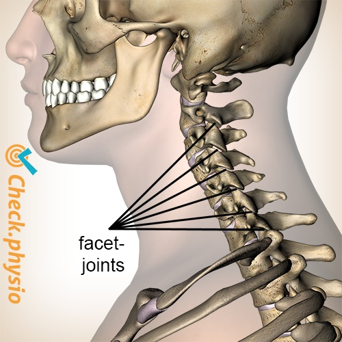 neck facet joint view lateral