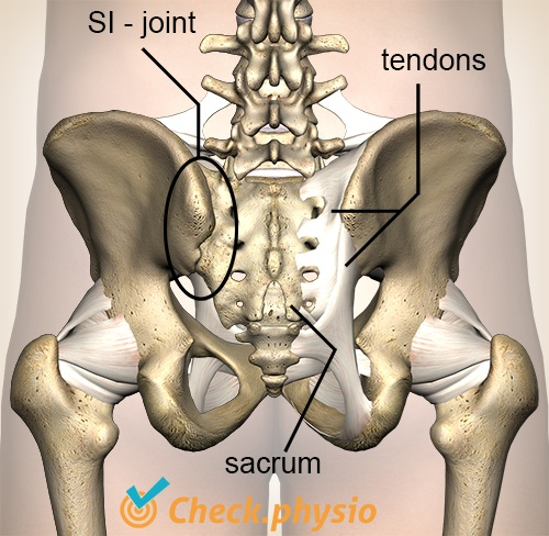 pelvis posterior capsel tendons si joint ligaments