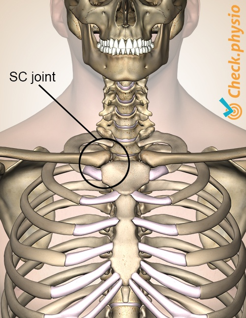 Sternoclavicular injury | Physio Check