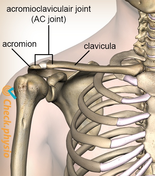 shoulder acromioclaviculair ac joint ligament anterior view