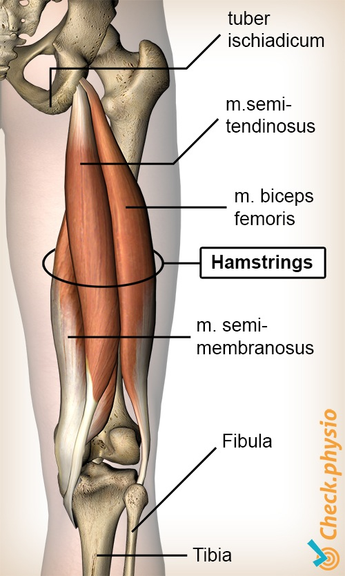 Acute Hamstring Injury Physio Check
